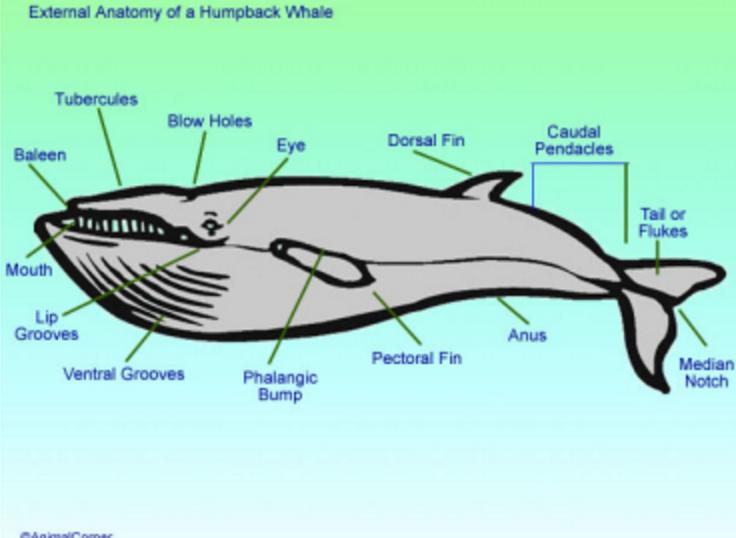 从817看巨大鲸鱼的内部结构