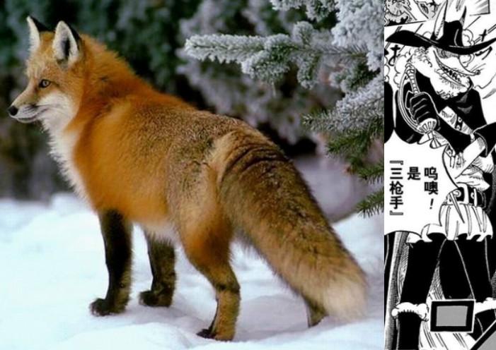 狐狸毛皮.jpg