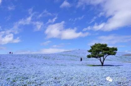 日立海滨花园.jpg