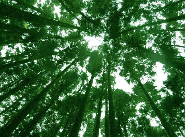 桧林.jpg